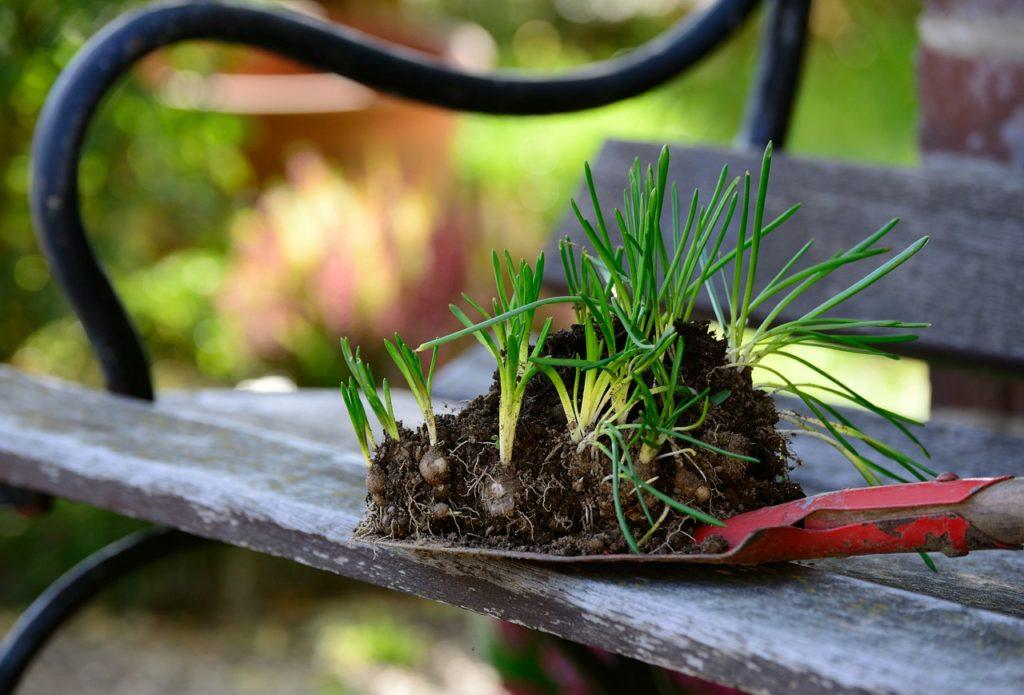 Hobbys finden Gartenarbeit